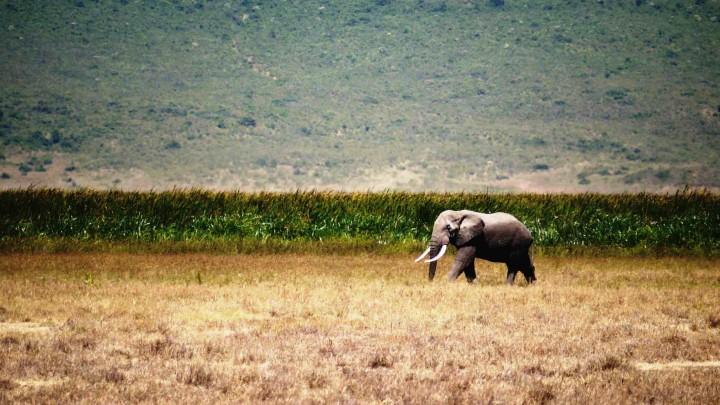 Massive 'development corridors' in Africa could spell environmental disaster