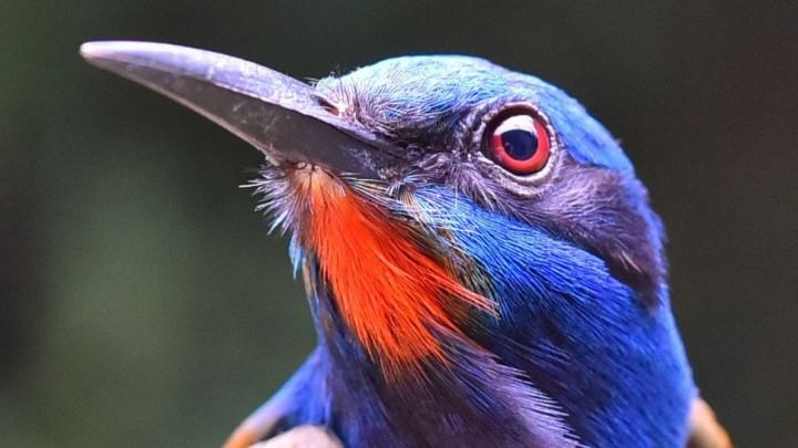 Πόσα τροπικά δάση χρειάζονται τα πουλιά;
