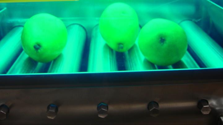 UV light can kill foodborne pathogens on certain fruits