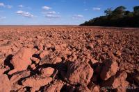 Dry Season Soy Field