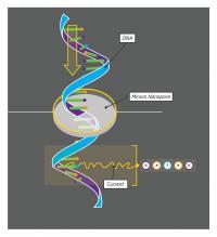 A Schematic Drawing of the MinION Nanopore