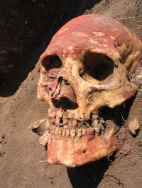 Bronze Age Human Skull