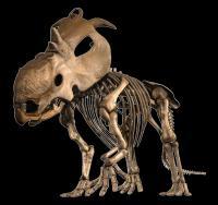 Pachyrhinosaur lakustai