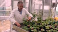 QUT 'Magical' Plant Gene Discovery
