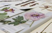 Plant Herbarium Specimens