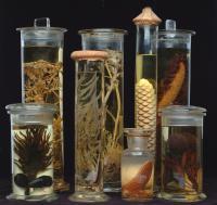 Spirit Collection Specimens
