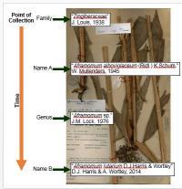 <i>Aframomum</i> Labeling