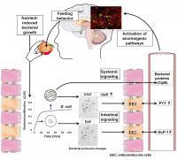 <i>E.coli</i> Proteins and Feeding Behavior