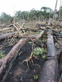 Deforestation In Africa