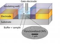 Schematic Of New E2 (Estrogen) Sensor