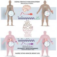 A Man's Weight Affects Sperm Epigenetics