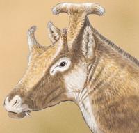 Extinct Three-Horned Palaeomerycid Ruminant Found in Spain