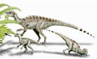 Heterodontosaurus, Adult and Juvenile