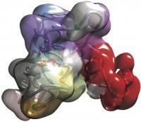3-D Genomics
