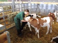 Stroking a Calf
