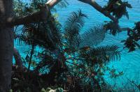 <em>Cycas nitida</em> in Visayan Coastal Habitat