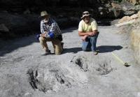 CU Denver Reseracher Martin Lockley Discovers Evidence of Dinosaur Mating Behavior