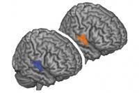 Brain Region Active During Mutual Understanding