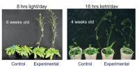 <em>Arabidopsis</em> Overexpressing AtPAP2