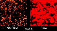 Quorum Sensing in No Flow and Flow