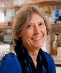 Nancy Kleckner, 2016 Thomas Hunt Morgan Medal Winner