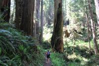 Redwoods Ecotourism