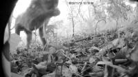 Video of the Predators