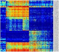 DNA Methylation Heatmap