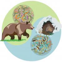 Microbiota in Bears Differs Seasonally
