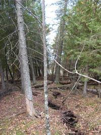 Menominee Crack Tree Tilt
