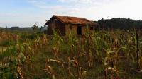 Rwandan Agriculture (2 of 3)