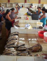 Fish Market in Peru