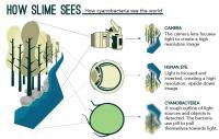 Slime Vision