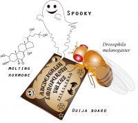 'Ouija Board' Protein