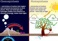 Photosynthesis vs. Chemosynthesis