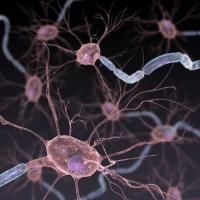 Blocking Stress Protein Blunts Chronic Pain