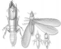 New Termites