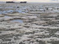 Bleached Reef