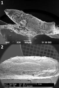 SEM Images of Silicone Replicas of Potsherd Impression