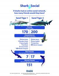 Shark Social Networks