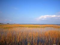 Low Marsh