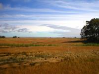High Marsh