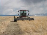 Harvesting Grassland