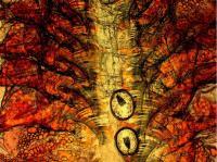 <i>Artemia</i>