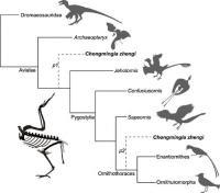 Simplified Mesozoic Avian Cladogram