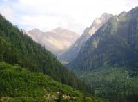 Forests rebound