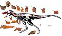 <i>Timurlengia</i> Skeleton