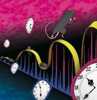 Infradian Oscillation of Circadian Genes
