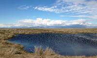 Wetland, Washington