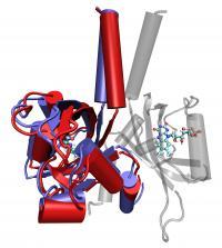 LOV Protein